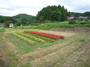 藤沢 第27区自治会 有休農地での花壇整備