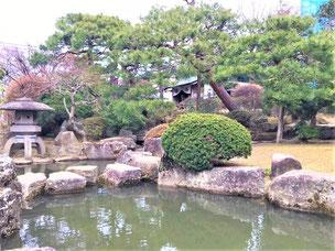 門かぶり松 斜幹仕立て 一関 浦しま公園