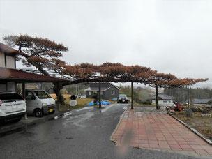 門かぶり松 一関 舞川
