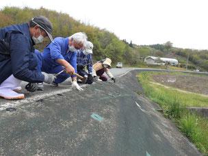 花泉 大森集落 営農組合で設置した防草シートは、集落公民館の事業で釘止め等の補修を行う