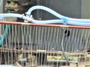 手作りの種まき機