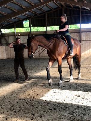 Eine offene, gebende und leichte Hand ist die Voraussetzung für ein Hineinfühlen in den Pferdekörper