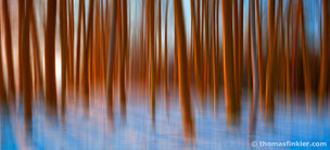 Thomas Finkler Photography, fine art nature photography, winter, blurry trees, light show, colorful, poetic, abstract