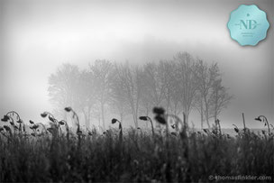 Black and white photography, fine art, awarded, award winning, nature, landscape, mist, fog, trees, silence, amazing, prints, for sale