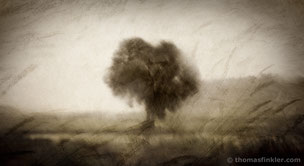Fine art photography, art photography, photographic art, vision, abstract nature, single tree, minimalist, summer