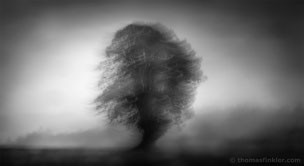 Fine art, photography, photographic art, photographer, black and white, tree, nature, trees, abstract, atmospheric, poetic, minimalist