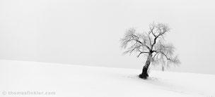 Thomas Finkler Photography, fine art nature black and white photography, single tree, minimal winter landscape, snow, poetic