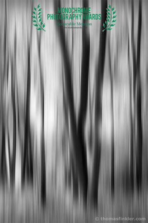 Buy, photography, fine art, black and white, monochrome, awarded, award winning, art, abstract, abstract nature, trees, forest, prints