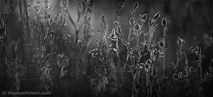 Black and white photography, monochrome photography, fine art, abstract nature, abstract, floral, flower