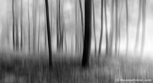 Fine art photography, art photography, photographic art, black and white, nature, abstract, trees, abstract forest, blurry