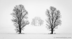 Thomas Finkler Photography, fine art black and white landscape photography, trees, minimal winter landscape, misty, snow, poetic