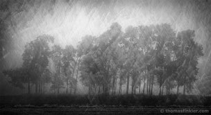 Black and white photography, art photography, photographic art, fine art, composite, vision, abstract nature, trees
