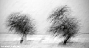 Thomas Finkler Photography, fine art nature black and white photography, trees, blurry, abstract, monochrome, minimal winter photography