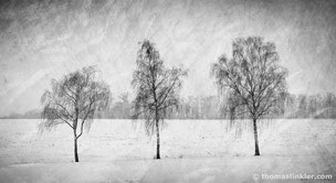 Black and white photography, art photography, photographic art, fine art, nature, landscape, trees, winter