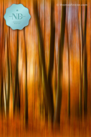 Buy, photography, fine art, color, awarded, award winning, nature, abstract, abstract forest, trees, most beautiful, colour, prints