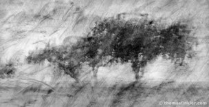 Black and white photography, art photography, fine art, composite, vision, abstract nature, abstract, trees, poetic