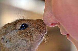 Tier und Mensch im Einklang - Tierheilung