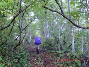 清浄坂を登りきると美しいブナ林に変わりました。