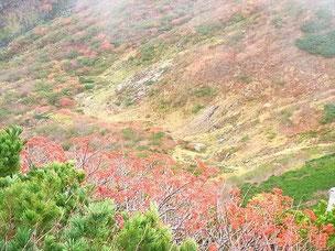 お花松原は昨日の冷え込みで紅葉もやや行き過ぎたか。