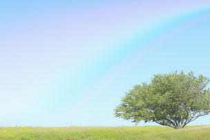 青空にかかる虹。芝生と緑の木。