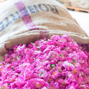Rose Skin Pack