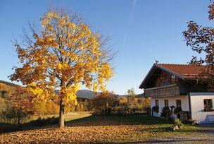 Alte Mühle im Herbst