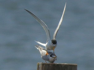 ・2012年6月26日 葛西臨海公園