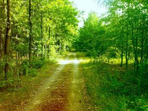 Waldweg in der Neuen Harth