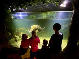 ...bestaunt man in tropischer Umgebung die Piranhas...