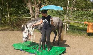 Pferdeausbildung bei Nadine J. M. Knauer, Gelassenheits- und Antischrecktraining bei Pferden