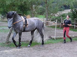 Pferdeausbildung bei Nadine J. M. Knauer, Bodenarbeit als wichtiges Ausbildungselement - der lange Zügel