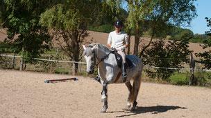 Pferdeausbildung bei Nadine J. M. Knauer, alternativer Reitunterricht auf Grundlage der Biomechanik und Pferdepsyche