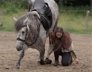 Pferdeausbildung bei Nadine J. M. Knauer, Zirkuslektionen zur Gymnastizierung und Gesunderhaltung des Pferdes