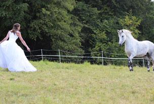 Pferdeausbildung bei Nadine J. M. Knauer, Freiarbeit als Vertrauenstraining