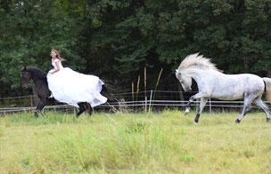 Pferdeausbildung bei Nadine J. M. Knauer, Vertrauenstraining individuell angepasst