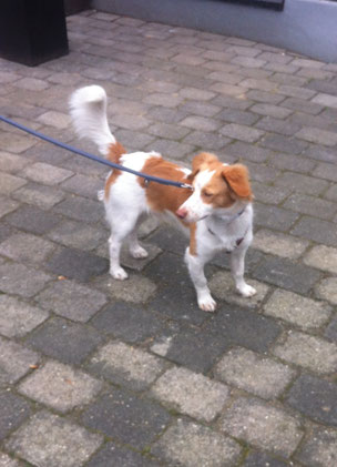 Otto, Mix aus Andalusien