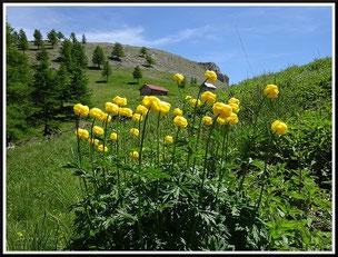 Le mont Autcellier (vers Roure)