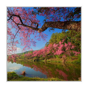 """Bildheizung """"Kirschblüte"""" 300 Watt, 60 x 60 cm, hier mit Silber-Rahmen; zum Vergrößern anklicken!"""