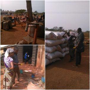Cashewkerne aus Nigeria