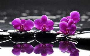 CCO fleurs collectif