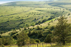 Paysage prairies Causse de Sauveterre - LOZERE Photo © Nadine Vilas