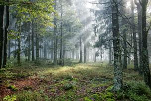 NP Bayerischer Wald