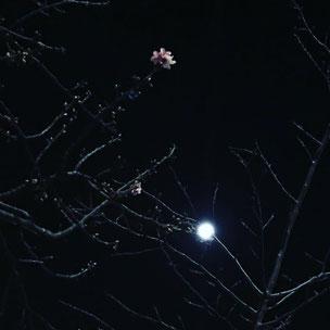 写真は、上のものがおそらく桃、こちらが梅と月。春が近くに来ているようですね。自然の美しさを感じて、また嬉しくなります。