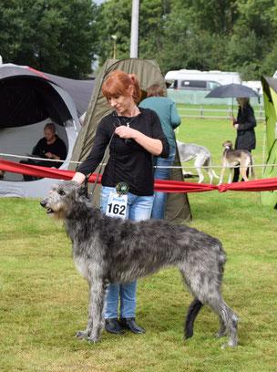 Scottish Deerhounds..., Scottish Deerhound Welpen vom Züchter..., Deerhoundwelpen mit Ahnentafeln FCI/VDH!