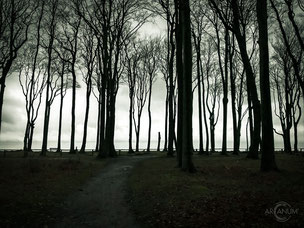 The Forest of Ghosts