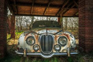 The Lonely Jaguar