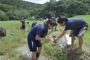 地域の環境保全団体、久米島ホタルの会にて活動をする生徒。自然や生物に興味がある生徒にとって、久米島は最高の学び場になります。