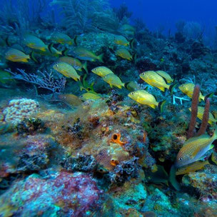 scuba diving tour in Cayo Coco Cuba