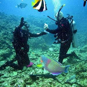 Course Divemaster in Varadero