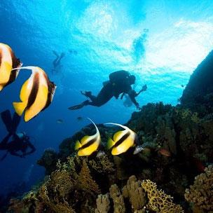 Viaje de buceo a Bahia Cochinos, Cienfuegos y Trinidad